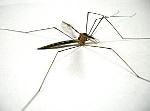 dengue fever madeira